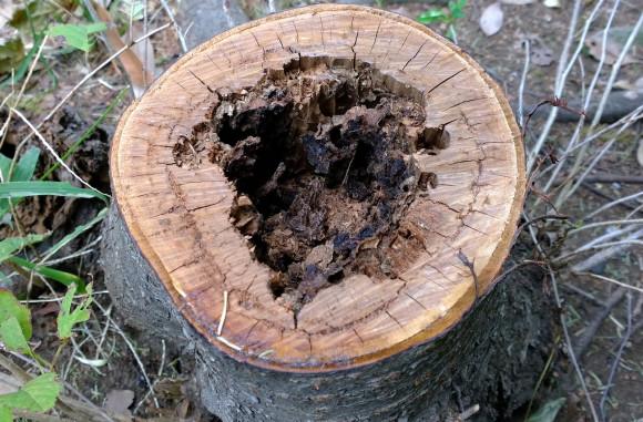 1020_wood